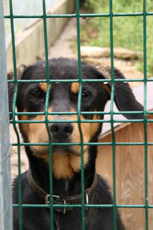 Les adoptions et l'accueil du public sont suspendues le temps du confinement