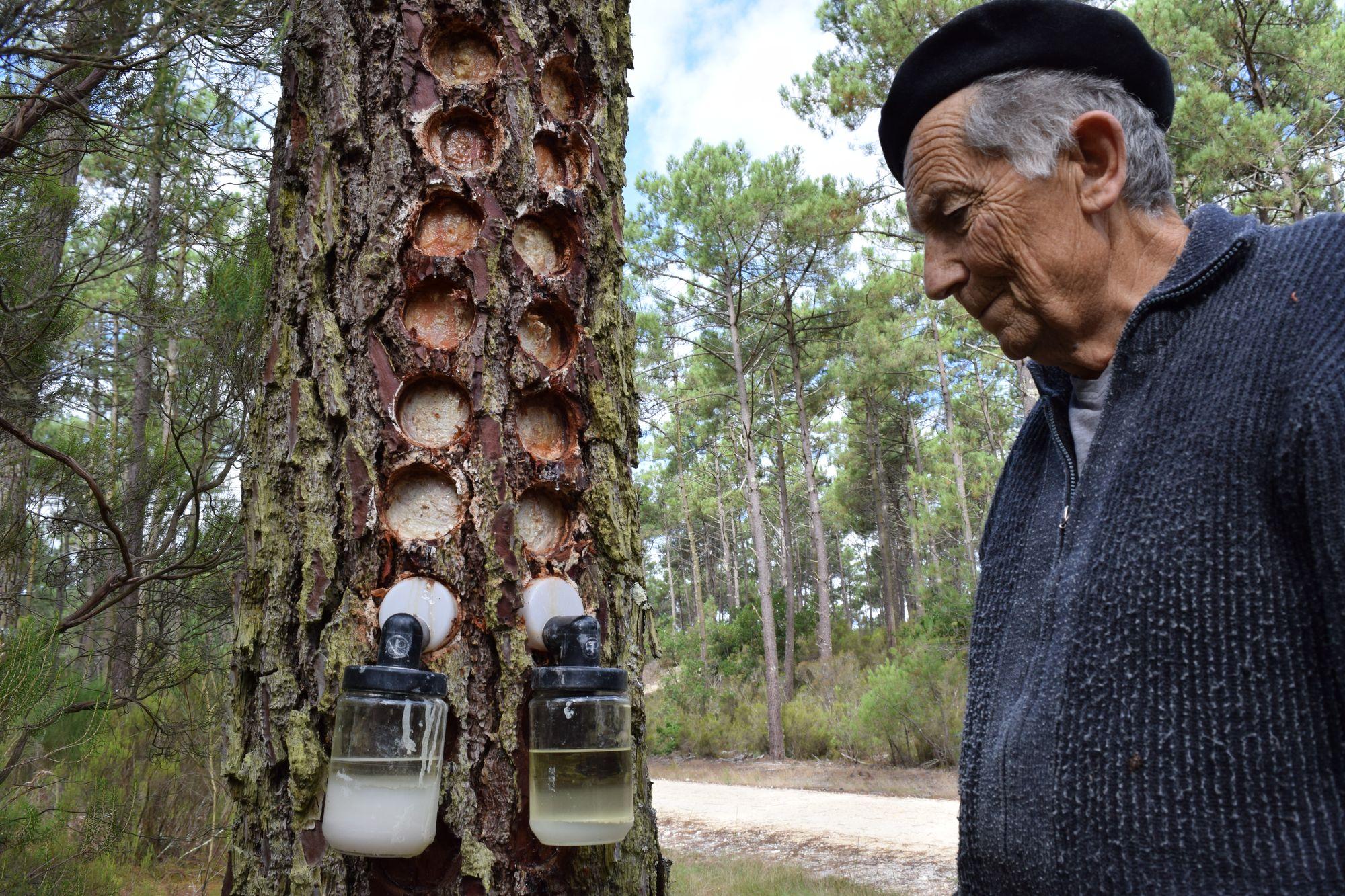 Une PME bisontine s'attaque au marché de l'essence de pin